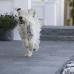 Granit grafit med hund